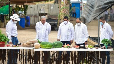 Photo of AMLO evalúa avances de Sembrando Vida en Guerrero; llama a aprovechar oportunidades en el campo mexicano